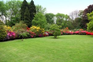 landscaping plants trees orangeburg